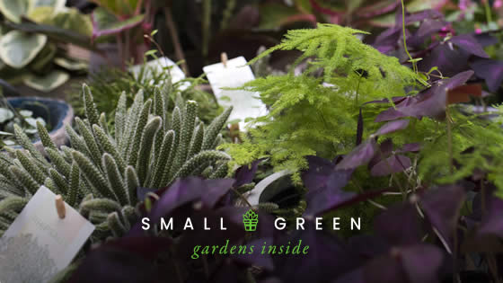 small and green cambridge