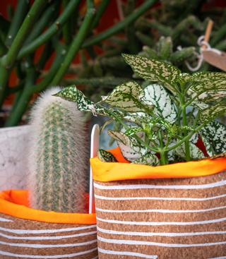 small & green pots